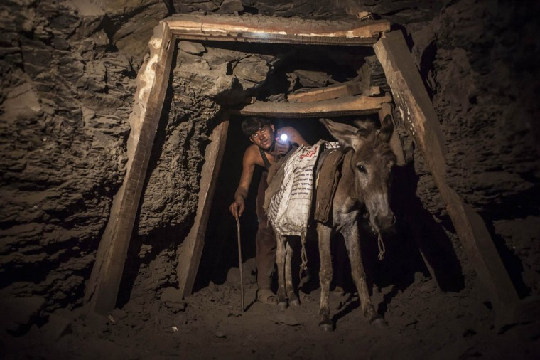 A miner with a donkey makes his way through the low and narrow tunnel leading out of a coal mine in Choa Saidan Shah in Punjab province, April 29, 2014. Workers at this mine in Choa Saidan Shah dig coal with pick axes, break it up and load it onto donkeys to be transported to the surface. Employed by private contractors, a team of four workers can dig about a ton of coal a day, for which they earn around $10 to be split between them. The coalmine is in the heart of Punjab, Pakistan's most populous and richest province, but the labourers mostly come from the poorer neighbouring region of Khyber Pakhtunkhwa. (Sara Farid/Reuters photo)