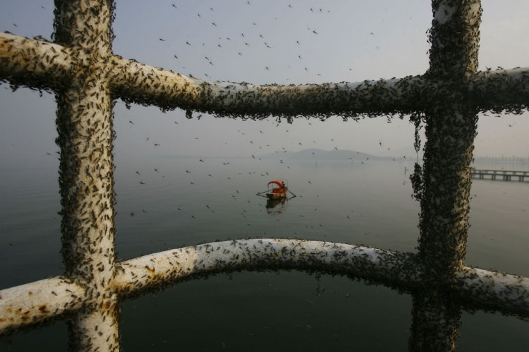 Gnats, or small biting flies, gather on railings along the East Lake in Wuhan, Hubei province on November 26, 2009. Gnats appear in the lake due to water pollution and they will leave once the temperature in the area drops in about half a month's time, according to experts, local media reported. (REUTERS/Stringer)