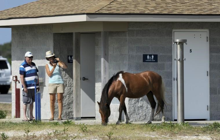 Park visitors photograph a pony outside a restroom at Assateague National Seashore. (Barbara Haddock Taylor/Baltimore Sun)