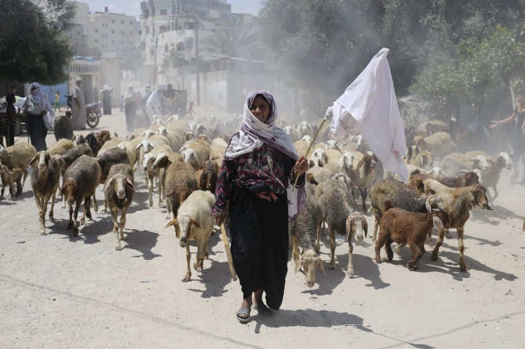 A Palestinian shepherd holds a white cloth as she flees with her herd following an Israeli ground offensive in Rafah in the southern Gaza Strip. Israeli forces on Saturday pressed ahead with a ground offensive in the Gaza Strip, where Palestinian militants kept firing rockets deep into Israel's heartland, pushing the death toll past 300 in almost two weeks of conflict. (Ibraheem Abu Mustafa/Reuters)
