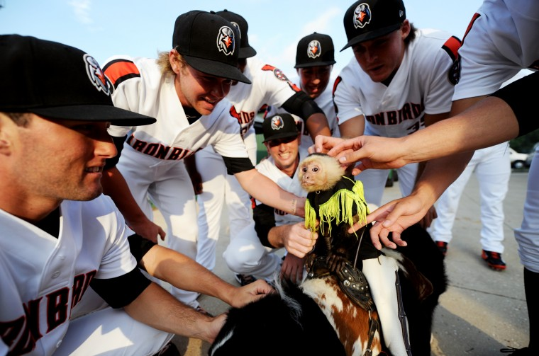 Members of the Aberdeen Ironbirds pet Sam the monkey and Bob the dog, part of Tim Lepard's traveling cowboy monkey rodeo act, before they walk onto the field for a game on Thursday, July 10, 2014. (Jon Sham/BSMG)
