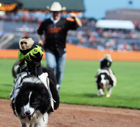 Sam the monkey rides into the back of the Ripken Stadium outfield after a short performance between the fifth and sixth innings of an Aberdeen Ironbirds game, Thursday, July 10, 2014. (Jon Sham/BSMG)
