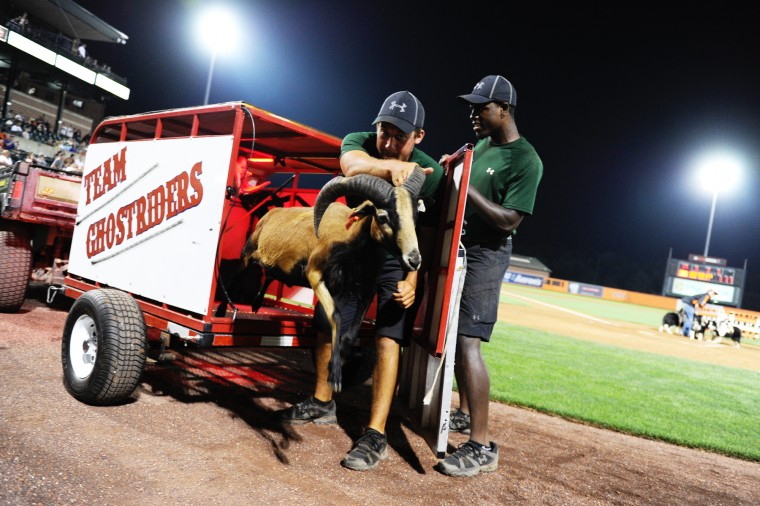 Aberdeen IronBirds grounds crew members Jordan Barr, left, and Jerry Edmonds help Tim Lepard and Team Ghostriders by getting the sheel out of the pen to be herded by the monkey/dog duos, Thursday, July 10, 2014. (Jon Sham/BSMG)