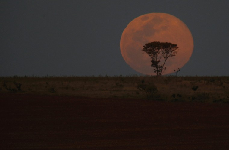 A supermoon is pictured behind a tree as it rises, in Brasilia, August 10, 2014. The astronomical event occurs when the moon is closest to the Earth in its orbit, making it appear much larger and brighter than usual. (Ueslei Marcelino/Reuters)