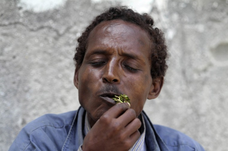 """A man chews khat in Mogadishu August 10, 2014. Grown on plantations in the highlands of Kenya and Ethiopia, tonnes of khat, or qat, dubbed """"the flower of paradise"""" by its users, are flown daily into Mogadishu airport, to be distributed from there in convoys of lorries to markets across Somalia. Britain, whose large ethnic Somali community sustained a lucrative demand for the leaves, banned khat from July as an illegal drug. This prohibition jolted the khat market, creating a supply glut in Somalia and pushing down prices, to the delight of the many connoisseurs of its amphetamine-like high. Picture taken August 10, 2014. (Feisal Omar/Reuters)"""