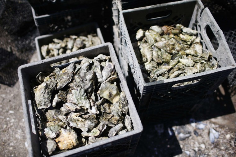 Crates of oysters are seen at Drakes Bay Oyster Company in Inverness, California July 31, 2014. (Stephen Lam/Reuters)