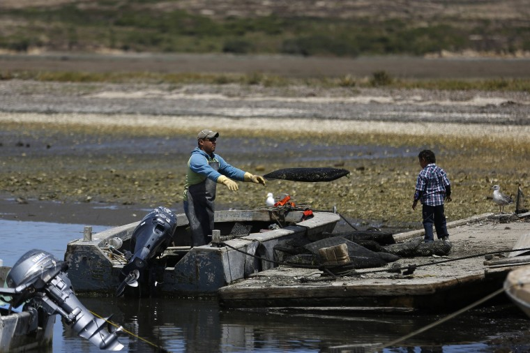An employee offloads a bag of oysters from a boat at Drakes Bay Oyster Company in Inverness, California July 31, 2014. (Stephen Lam/Reuters)