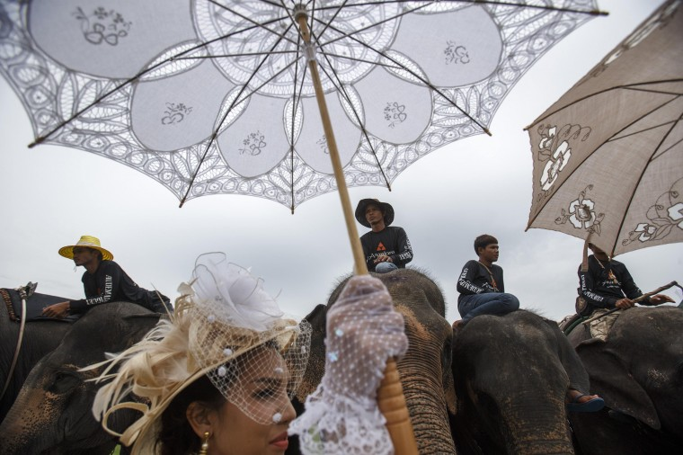 A woman holds a parasol as she stands next to elephants during a match at the 2014 King's Cup Elephant Polo Tournament in Samut Prakan province, on the outskirts of Bangkok. A total of 16 international teams and 51 Thai elephants are participating in the tournament that runs from August 28-31. (Athit Perawongmetha/Reuters)