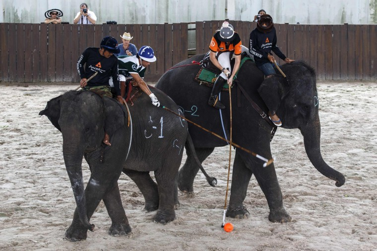 A player from Peninsula (blue hat) fights for the ball with a player from Anantara Arabian Knights during their 2014 King's Cup Elephant Polo Tournament in Samut Prakan province, on the outskirts of Bangkok. A total of 16 international teams and 51 Thai elephants are participating in the tournament that runs from August 28-31. (Athit Perawongmetha/Reuters)