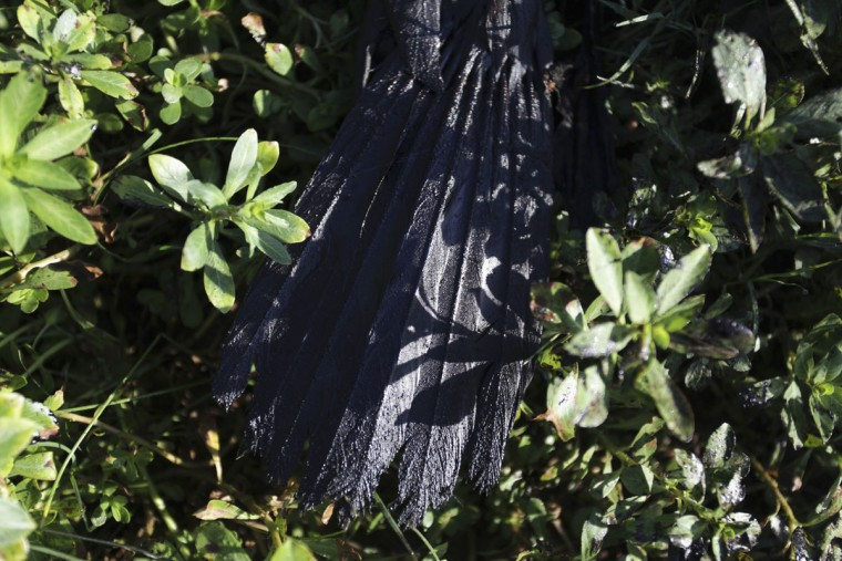 Oil-stained tail feathers of a dead bird are seen on the banks of San Juan river after an oil spill in Cadereyta on August 26, 2014. (REUTERS/Daniel Becerril)