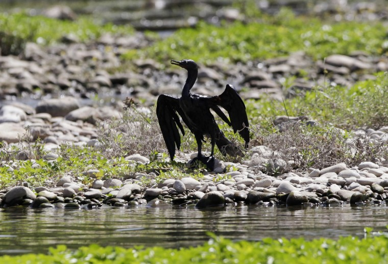 A bird covered in oil stretches its wings on the shores of the river San Juan in Cadereyta August 21, 2014. (REUTERS/Daniel Becerril)