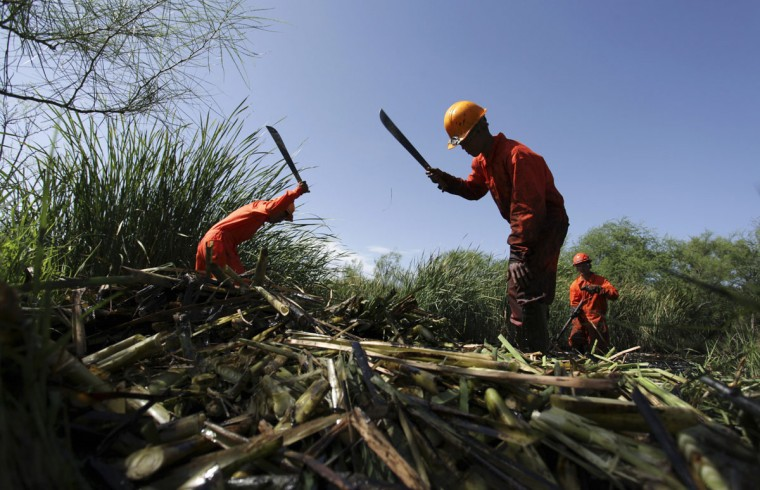 Workers cut reed while trying to clean the area from leaked oil at an irrigation canal that flows into the river San Juan in Cadereyta August 22, 2014. (REUTERS/Daniel Becerril)