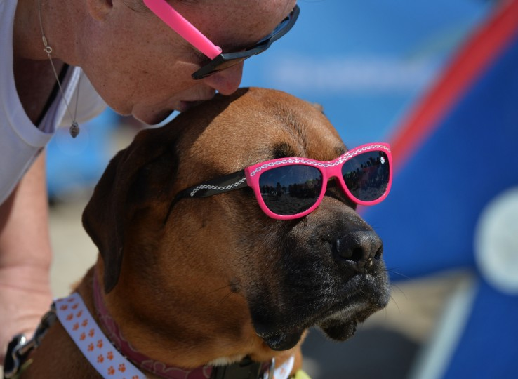 Roxy the Surf Dog kiss a kiss from her owner Suzie Howell as she waits for her heat in the X Large division during the 6th Annual Surf Dog competition at Huntington Beach, California on September 28, 2014. (Mark Raltson/Getty Images)