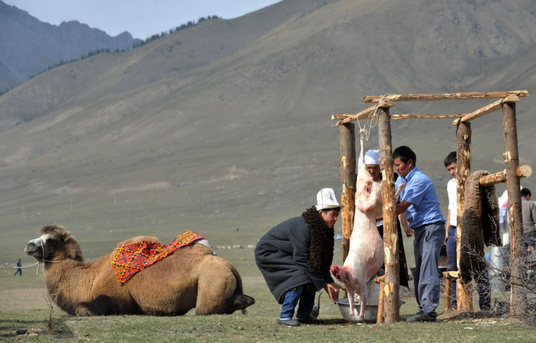 Kyrgyz men skinning a sheep during the first World Nomad Games in the Kyrchin (Semenovskoe) gorge, some 300 km from Bishkek. (Vyacheslav Oseledkov/AFP/Getty Images)