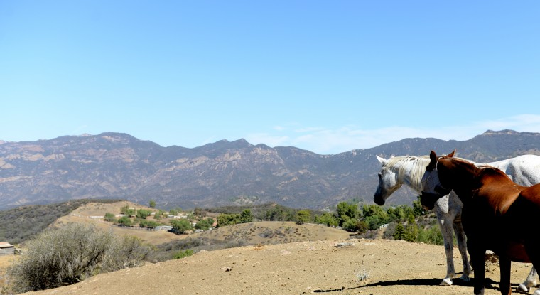 There weren't many homes along the California coast, but there were plenty of ranches. Nearing the coast highway, I saw these horses, which seemed to be standing on the edge of a cliff, staring out at the mountains.