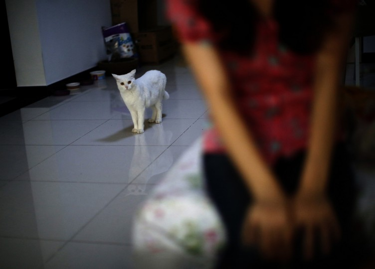 Zhang Xiaomi, a cat raised by Li Zhen and her husband, who was onboard Malaysia Airlines Flight MH370 which disappeared on March 8, 2014, is seen while Li has an interview with Reuters in Beijing August 21, 2014. Li said her only wish now is that her husband comes home alive no matter how much he has changed. Six months after Malaysia Airlines Flight MH370, with 239 mostly Chinese people on board, disappeared about an hour into a routine journey from Kuala Lumpur to Beijing March 8, loved ones of missing passengers derive what comfort they can from what's left behind after the world's greatest aviation mystery. (Kim Kyung-Hoon/Reuters)