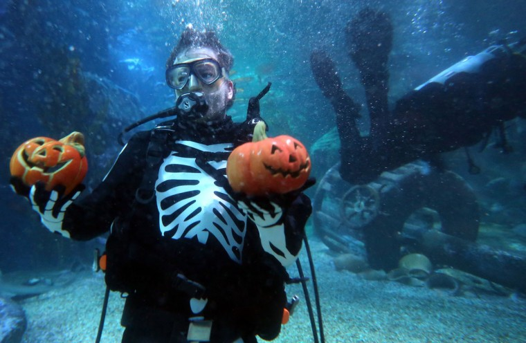 A diver dressed as a skeleton feeds fish out of jack-o'-lanterns to rays and sharks in a Halloween-themed aquarium at the SEA LIFE & AquaDom attraction on October 30, 2014 in Berlin, Germany. The event was presented to call attention to the one hundred million or more sharks killed per year in the world's oceans, according to organizers. (Adam Berry/Getty Images)