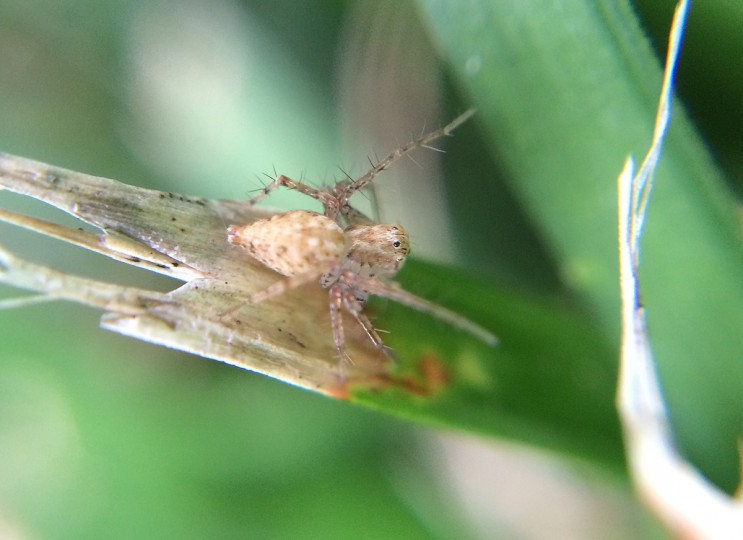 Lynx spider on a blade of grass. (Jerry Jackson/Baltimore Sun)