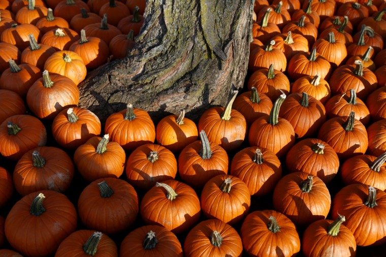 "Pumpkins wait to be painted during Sagamore Farm's Fall Festival. The festival is held every year as a finale for the Three Diamond Club's ""Saturday at Sagamore"" series which includes a monthly walk-through tour of the farm. Cassidy Johnson/Baltimore Sun"