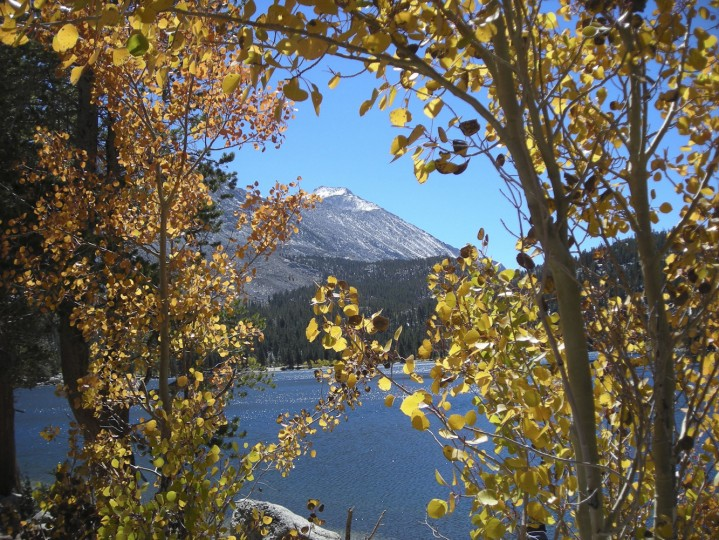 Fall colors are in full evidence this time of year around Bishop, Calif., the largest town along a long stretch of Highway 395 on the eastern side of the Sierra Nevada range. (Photo courtesy Bishop Chamber of Commerce & Visitors Bureau/MCT)