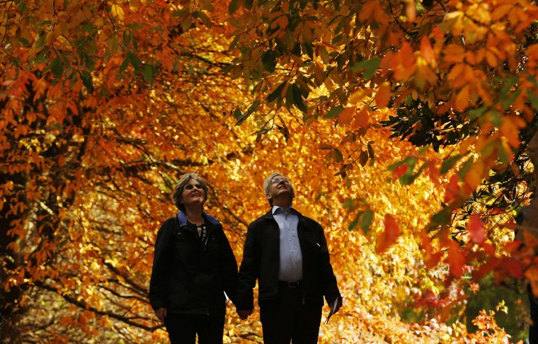 A couple looks up at the autumn colours as they walk through trees at Sheffield Park Garden near Haywards Heath in southern England October 20, 2014. (Luke MacGregor/Reuters)