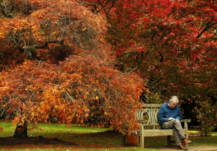 A man reads under trees in autumn colour at Sheffield Park Garden near Haywards Heath in southern England October 20, 2014. (Luke MacGregor/Reuters)