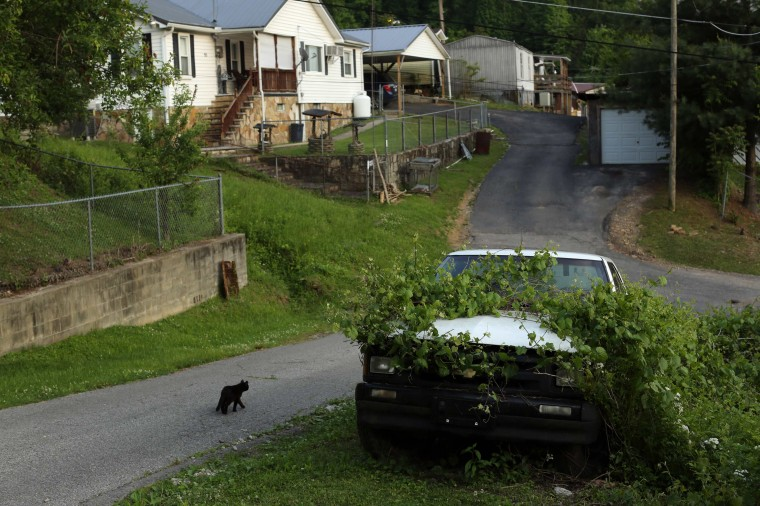 A cat walks past a pickup truck covered in vegetation on a street in Gilbert, West Virginia May 20, 2014. (Robert Galbraith/Reuters)