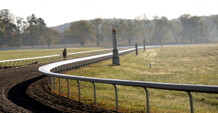 A horse trains on the outdoor track at Sagamore Farm. The farm currently has 43 horses racing or in training to race. Cassidy Johnson/Baltimore Sun