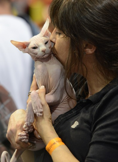 Owner kisses her cat on during a two-day world cat exhibition in Prague. (Michal Cizek/AFP-Getty Images)