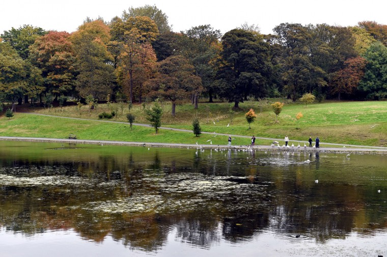 People feed swans and ducks in the boating lake at Sefton Park in Liverpool, northwest England, on October, 14, 2014. (Paul Ellis/AFP/Getty Images)