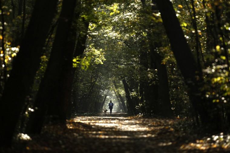 A woman jogs with her dog through a park during a sunny autumn day in central Sofia October 14, 2014. (Stoyan Nenov/Reuters)