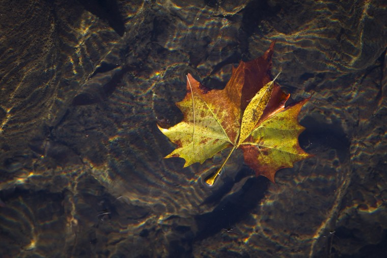 """A fall leaf floats on the surface of the Willowemoc Creek in the Catskills region town of Roscoe, New York October 7, 2014. Roscoe is nicknamed """"Trout Town USA"""", with a number of top ranked trout fishing streams in the area. (Carlo Allegri/Reuters)"""