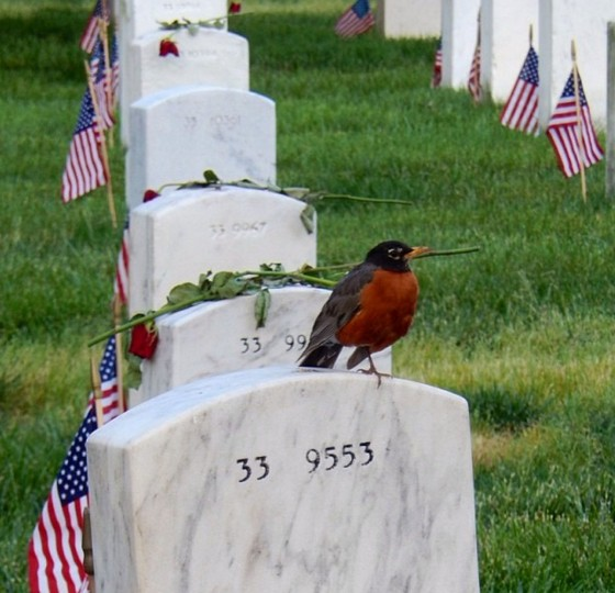 Memorial Day at Arlington National Cemetery on May 29, 2014.
