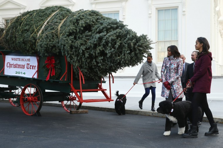 U.S. first lady Michelle Obama and her daughters Sasha Obama (L) and Malia Obama (R), their family dogs, Bo and Sonny; and the tree grower Chris Botek (2nd R) and his father Francis Botek of Lehighton, PA, receive the White House Christmas Tree on the north side driveway of the White House November 28, 2014 in Washington, DC. The 18 1/2 feet tall white fir tree will be displayed in the Blue Room and will be the centerpiece of the White House holiday decorations. (Photo by Chip Somodevilla/Getty Images)