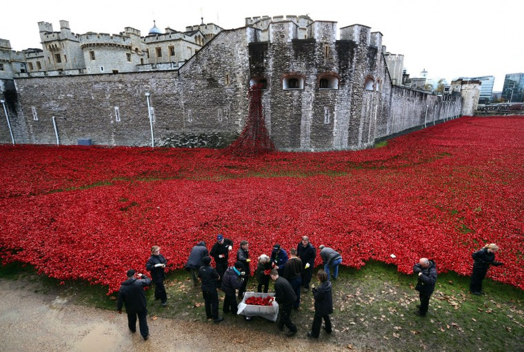 Volunteers begin removing 888,246 hand-made poppies, representing each of the commonwealth servicemen and women killed in the first world war at Tower of London on November 12, 2014 in London, England. Around five million people are thought to have visited the artwork entitled 'Blood-Swept Lands and Seas of Red' by artist Paul Cummins and Tom Piper and removal is estimated to take 8,000 volunteers around two weeks. (Photo by Carl Court/Getty Images)