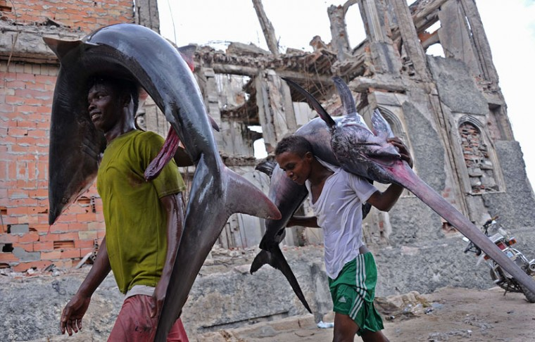 Porters carry the carcasses of a shark (L) and a Marlin (R) to the local market in Hamarweyne near the port of Mogadishu on the Indian Ocean coast on November 18, 2014 in the Somalia capital as fishermen bring in their catch. (Mohamed Abdiwahab/AFP/Getty Images)