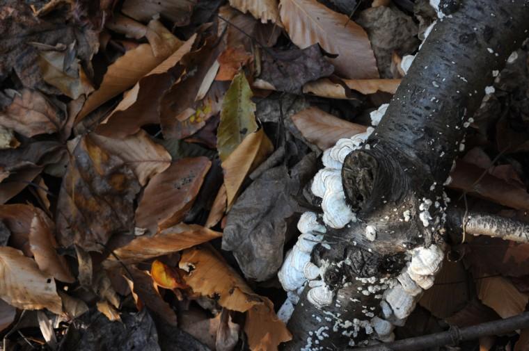 Wild mushrooms grow on a tree branch that has fallen in Herring Run Park. (Kim Hairston/Baltimore Sun)