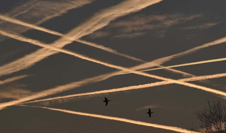 Ducks fly beneath contrails in the sky at dawn in west London November 24, 2014. (Toby Melville/Reuters)