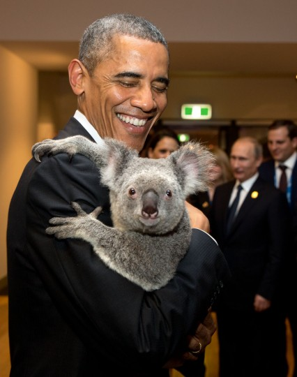 "Nov. 15, 2014 ""The President holds a koala backstage prior to the G20 Welcome to Country Ceremony at the Brisbane Convention and Exhibition Center in Brisbane, Australia."" (Official White House Photo by Pete Souza)"
