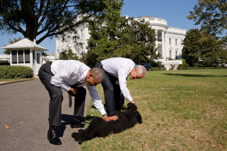"Oct. 6, 2014 ""The President was taking a walk with former Chief of Staff and Chicago Mayor Rahm Emanuel when they stopped to pet Sunny along the South Grounds of the White House."" (Official White House Photo by Pete Souza)"