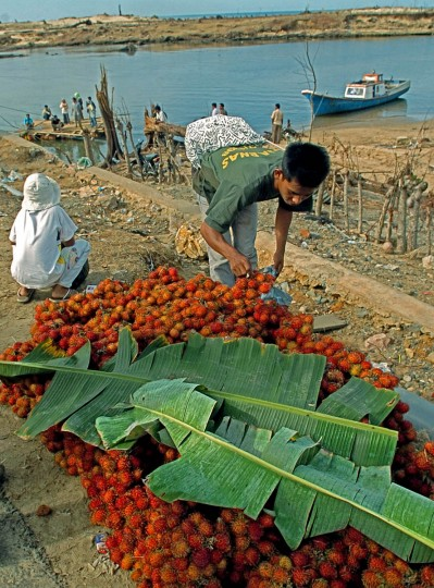 Banana leaves protect fresh rambutans on display for residents to purchase at the washed out bridge at Lhok Nga River as residents cross the river using a makeshift ferry (background left) Wednesday, Jan. 19, 2005 following a tsunami that swept through the town in December. Fishermen have halted their trade for 100 days in response of the tsunami. (Karl Merton Ferron, Baltimore Sun)