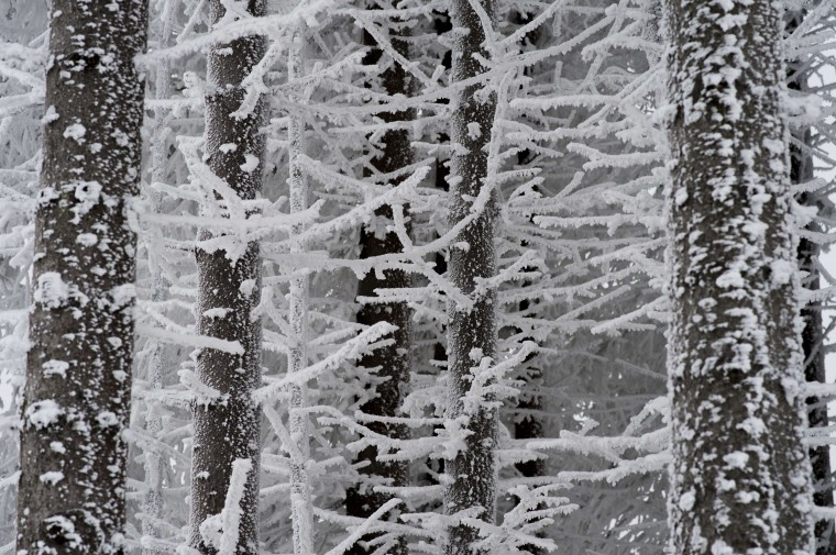 Trees of a forest in the Harz region are covered in snow on December 3, 2014 near Braunlage, central Germany. (Swen Pfoertner/AFP/Getty Images)