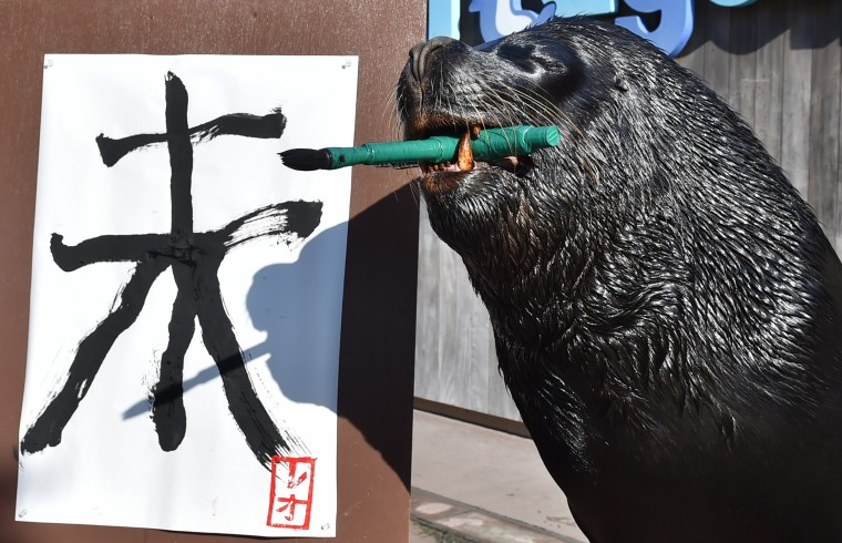 "A sea lion paints a Chinese character for ""sheep"" in calligraphy as part of a New Year's Day attraction at the Hakkeijima Sea Paradise aquarium in Yokohama, suburban Tokyo on December 31, 2014. The event, marking the forthcoming Chinese lunar calendar ""Year of the Sheep"", is part of the aquarium's New Year's attractions until February 1. The actually 2015 lunar new year will begin on February 19. (Kazuhiro Nogi/AFP/Getty Images)"