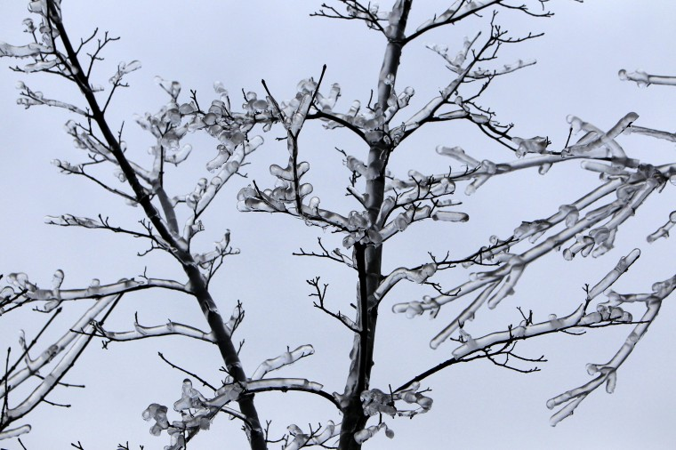 Branches of a tree are covered with ice in Buda hills in Budapest, December 3, 2014. Ten of thousand homes on the outskirts of Budapest went without electricity this week as freezing rain blanketed the area and falling trees cut power lines, Hungary's Disaster Relief Agency said. (Bernadett Szabo/Reuters)