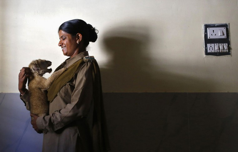 Forest guard Rashila Ben holds a lion cub inside an animal hospital located in the Gir National Park and Wildlife Sanctuary in Sasan, in the western Indian state of Gujarat. The sanctuary, which is home to India's Asiatic lions, occupies an area of 1,412 square km and employed female guards, for the first time in the country, back in 2007. According to one of the female guards, they earn a monthly salary of around $148 for working almost 12 hours a day, six days a week. (Anindito Mukherjee/Reuters)