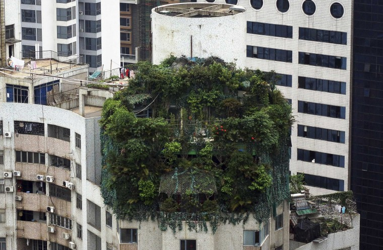 AA suspected illegal construction is seen covered by green plants atop a 19-storey residential building in Guangzhou, Guangdong province in this April 11, 2014 file photo. REUTERS/China Daily