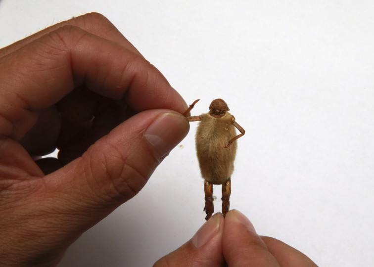 """Folk artist Yu Guangjun attaches the legs from a cicada slough onto a magnolia bud as he makes a """"Maohou"""" in his house in Beijing in this September 2, 2014 file photo. REUTERS/Kim Kyung-Hoon/Files"""