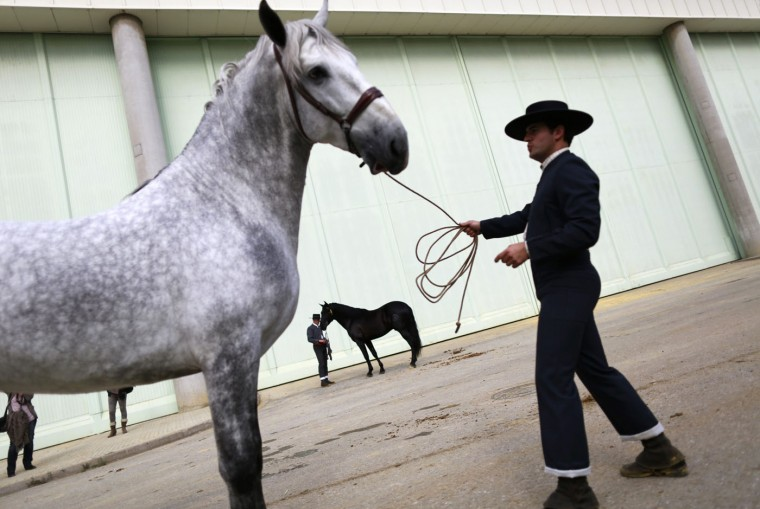 Andalusian horsemen wait before taking part in a morphological contest for colts of three years during the Sicab International Pre Horse Fair in the Andalusian capital of Seville December 3, 2014. The show runs till December 7 and is dedicated in full and exclusively to the purebred Spanish horse, to offer visitors a wide range of examples of breed versatility for their enjoyment. REUTERS/Marcelo del Pozo