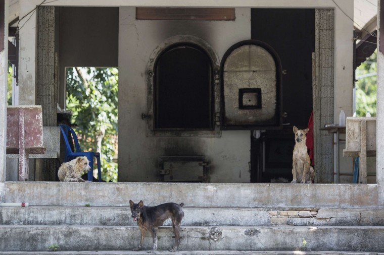 Dogs are seen at a crematorium at the former tsunami victims identification centre near Ban Nam Khem, in Phang Nga province, December 15, 2014. Over 400 bodies of victims of the 2004 tsunami, including 369 still unidentified, are buried in the cemetery across the road from the former victims' centre where thousands were identified following the disaster.