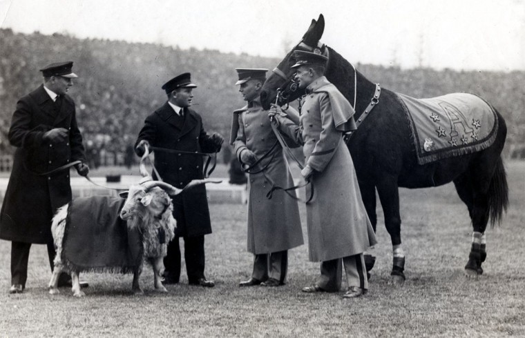 The Navy Goat and the Army Mule meet before the Army-Navy game at Baltimore Stadium on Dec. 1, 1924. (Baltimore Sun file photo)